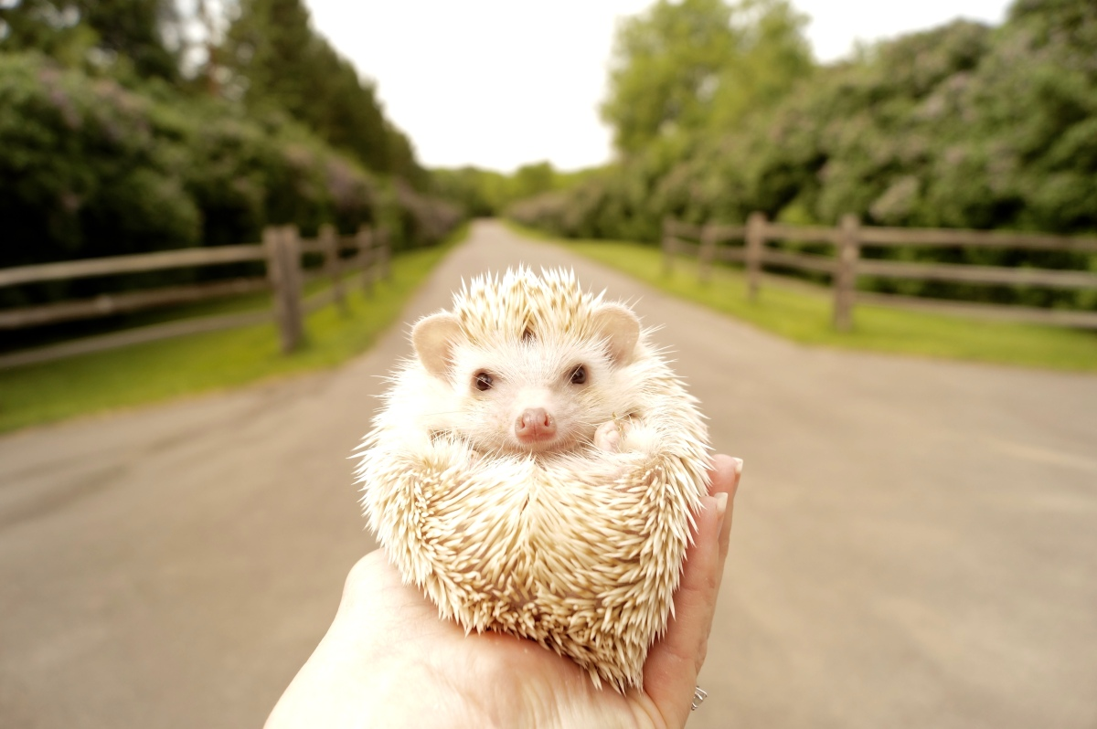 Join the hedgehog journey