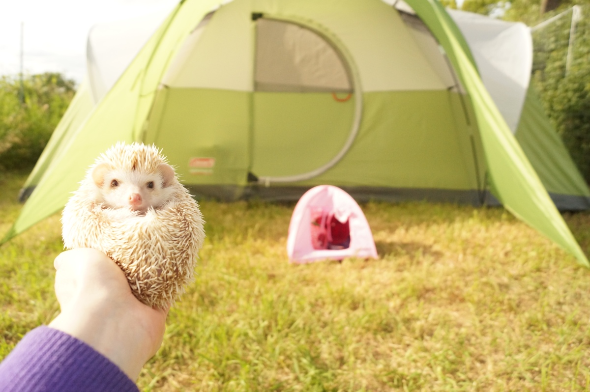 Things to bring for your hedgehog's road trip